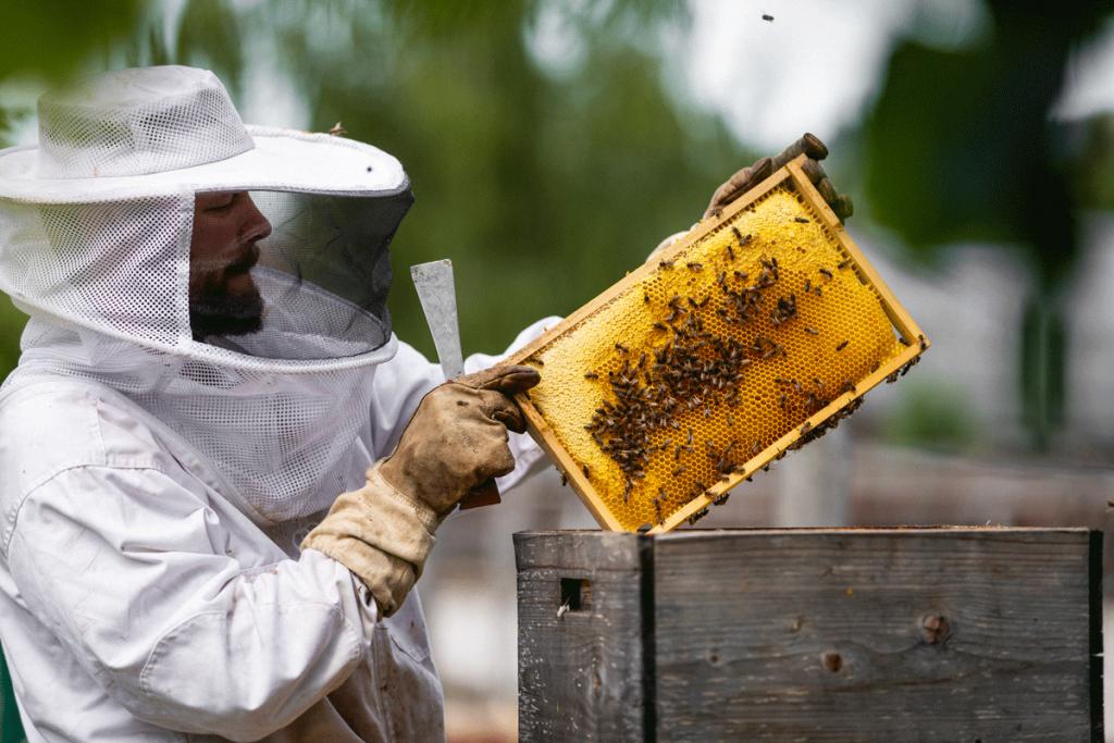 Bienen Aigner Biohof