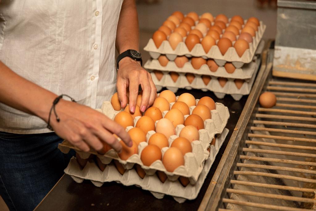 Bio Eier im Hofladen