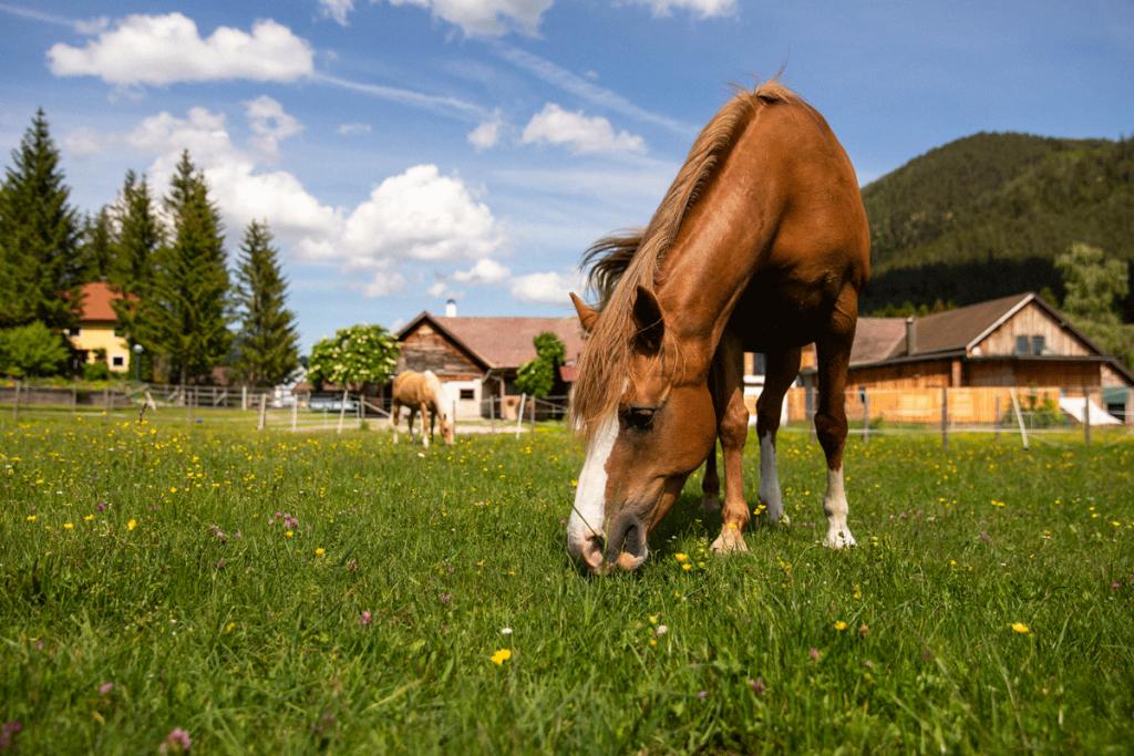 Pferde Biohof Aigner