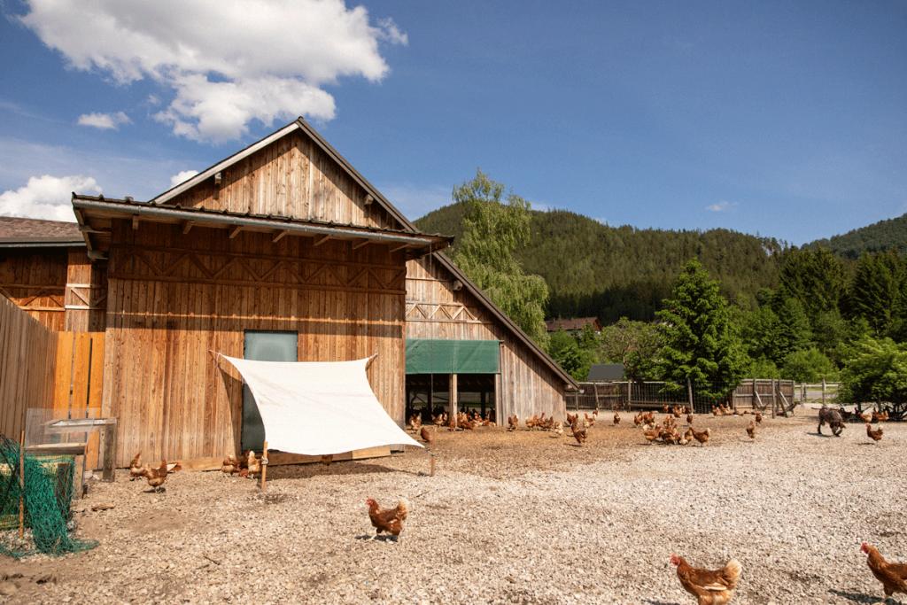 Freilandhühner Sonnenschutz
